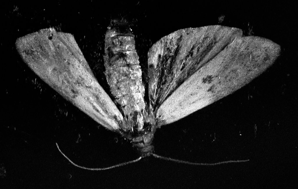 moth003.jpg