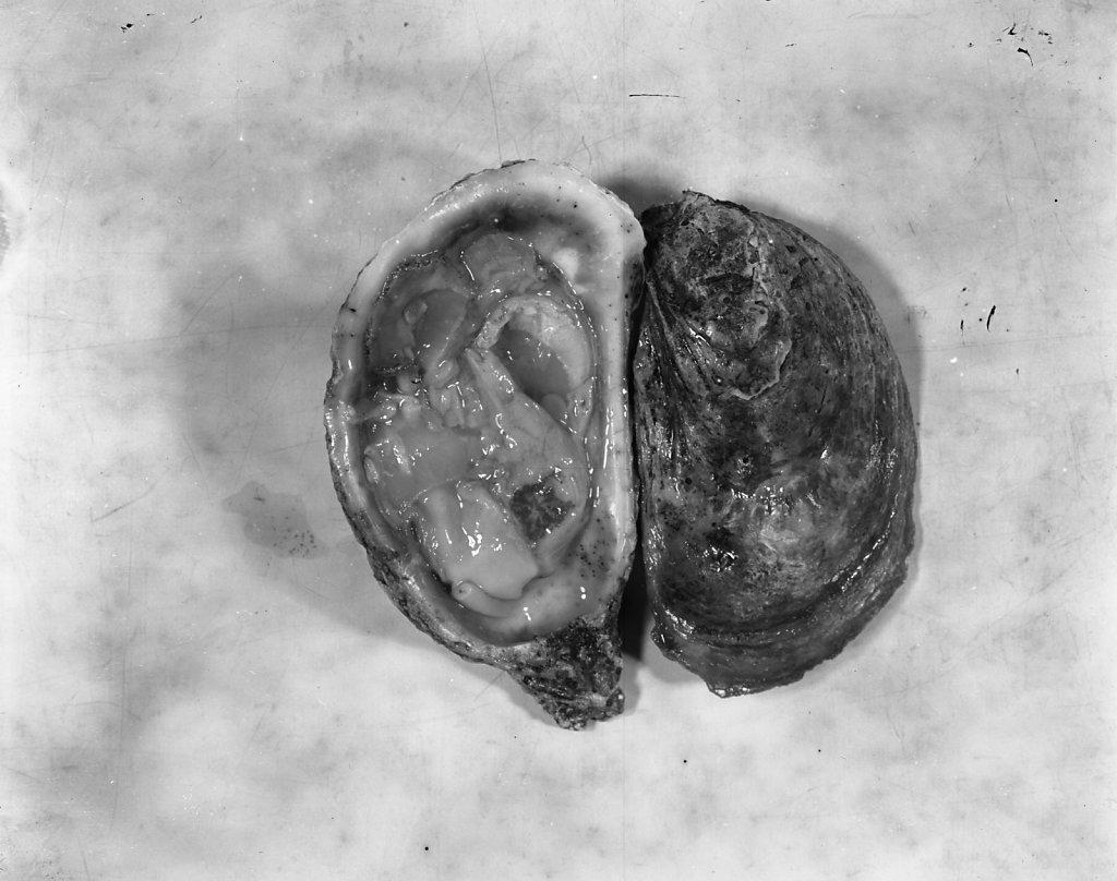 oyster1-001.jpg