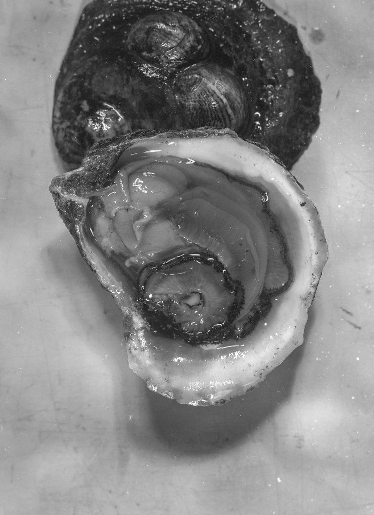 oysters007.jpg
