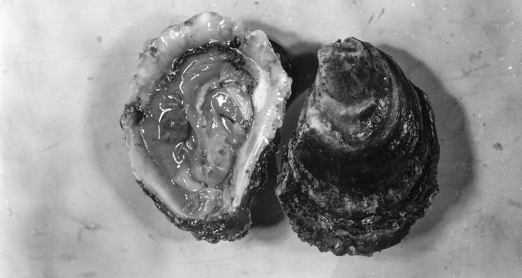 oysters011.jpg